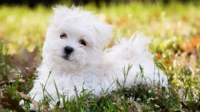 Собака небольшого размера