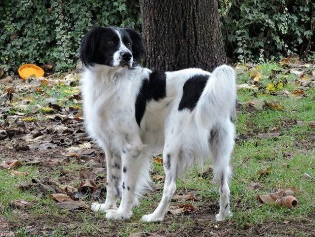 Собака на природе возле дерева