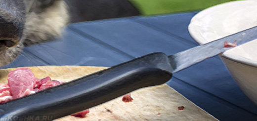 Собака ест сырое мясо и нож лежит на тарелке