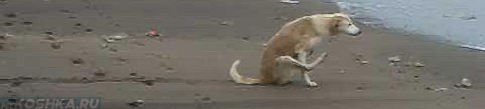 Собака ездит на попе на природе у моря