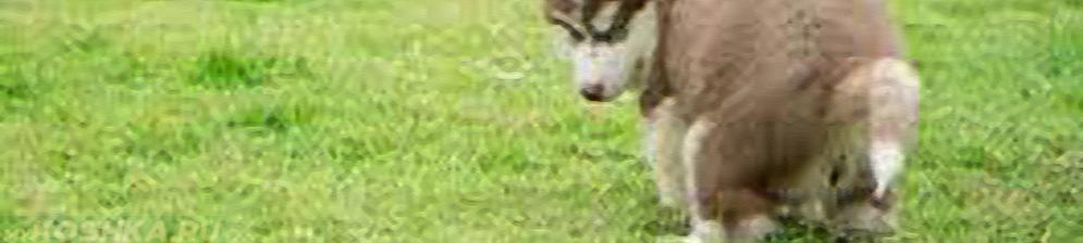 Собака какает на природе