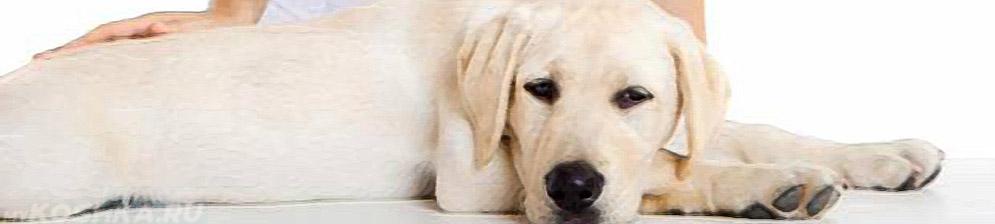 Собака на приёме у врача