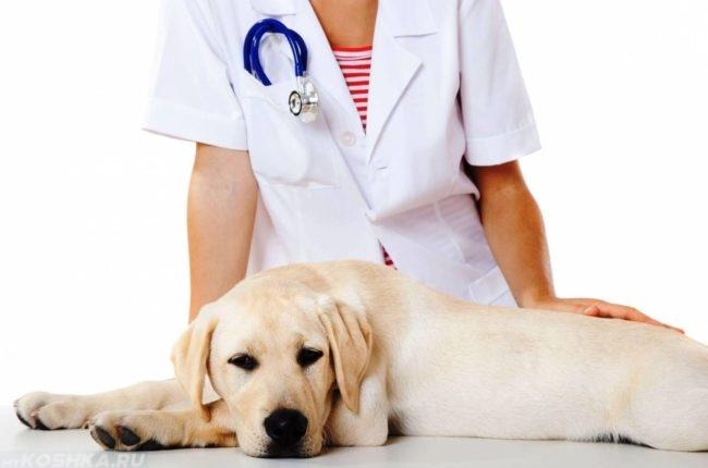Собака и ветеринар в белом халате
