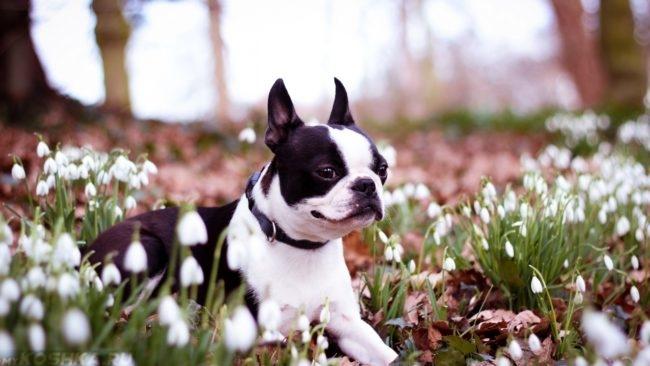 Собака весной среди цветов