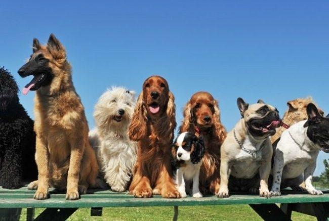 Собаки разных пород на фоне голубого неба
