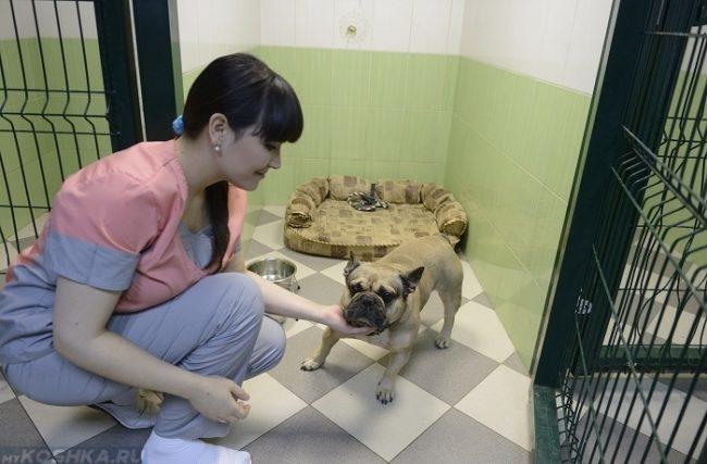 Собака в стационаре и ветеринарный врач