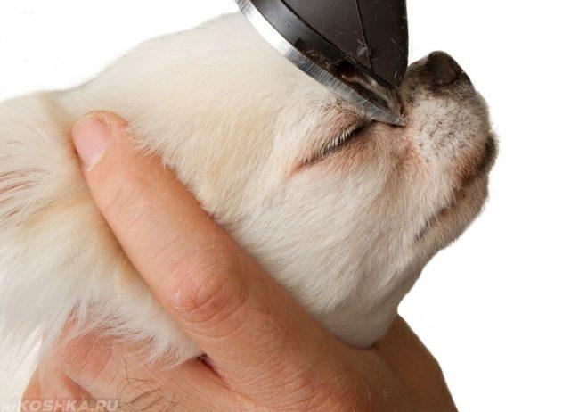 Стрижка шерсти вокруг глаз собаки