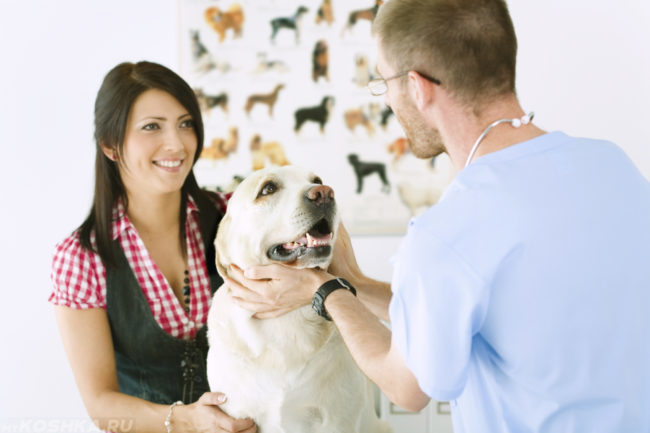 Собака с хозяйкой у ветеринара