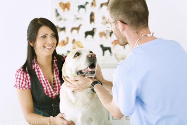 Собака на приёме у ветеринара с хозяйкой