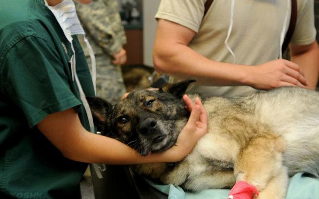 Собака на столе в ветеринарной клинике