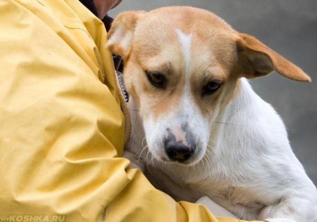 Угнетённая собака на руках хозяина