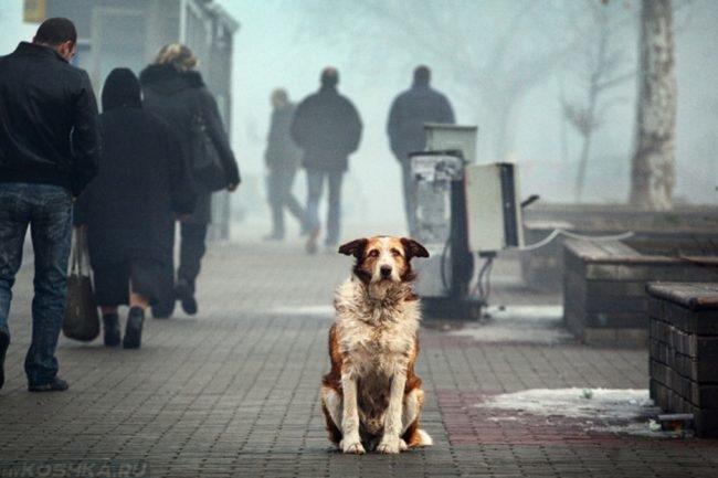 Собака на дороге в городе