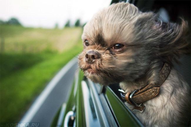 Сильный ветер и собака в машине