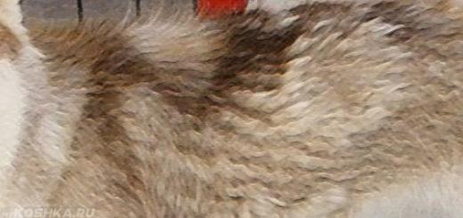 Выпадение шерсти у собаки