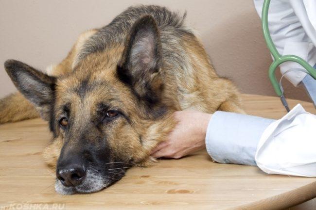 Заболевшая собака у ветеринара
