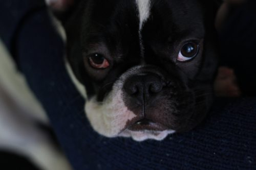 Проблема с глазами у собаки