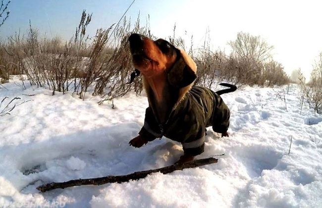 Собака зимой среди снега