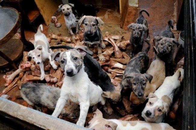 Антисанитарные условия у собак