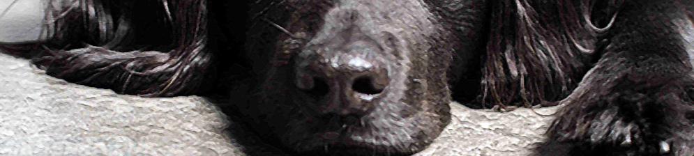 Чёрная больная собака