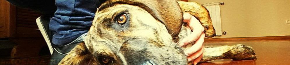 Собака больная циррозом печени