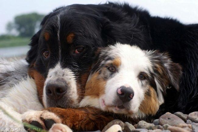 Две собаки рядом на природе