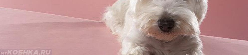 Холеостаз у белой собаки