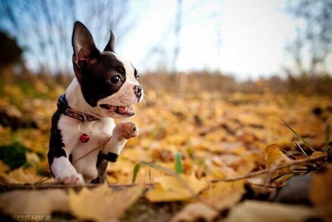 Собака играющая на природе