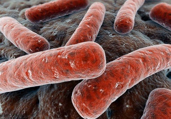 Микробактерии туберкулёза