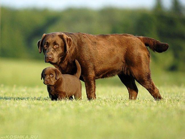 Щенок и взрослая собака на природе