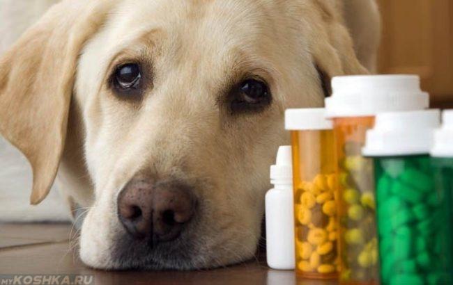 Таблетки в баночках и собака
