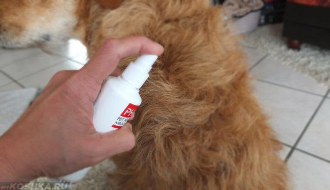 Обработка тела собаки из спрея