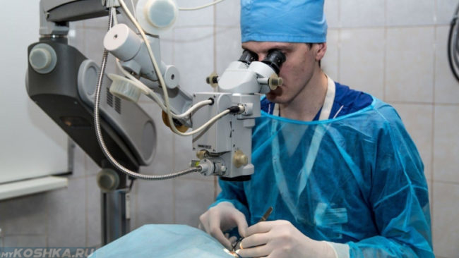 Хирургическая операция на глазах собаки