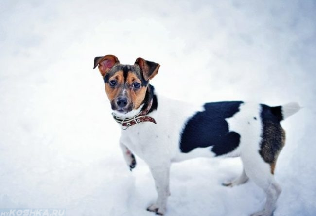 Собака зимой на улице на снегу