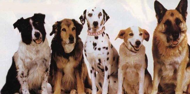 Разные породы собак сидящие в ряд