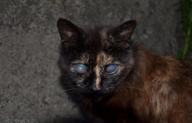 Потеря зрения у чёрной кошки