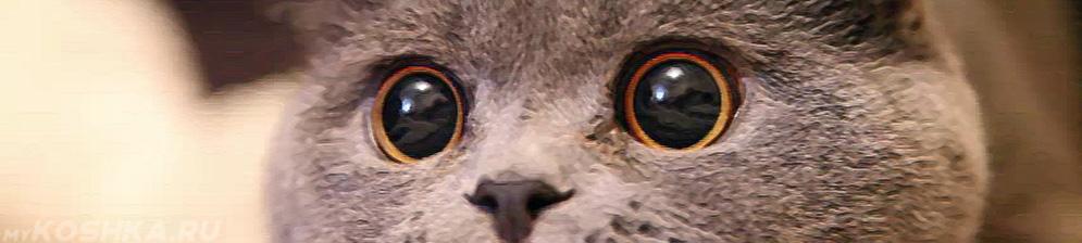 запах изо рта у кошек лечение