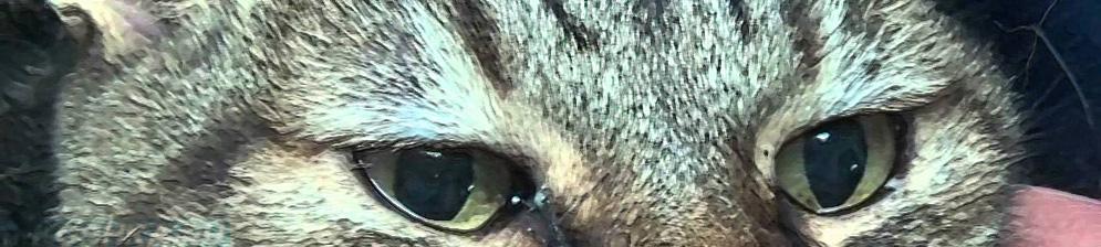 Слезятся глаза у кошки вблизи