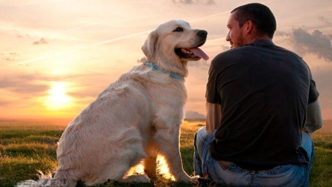 Собака и хозяин на природе