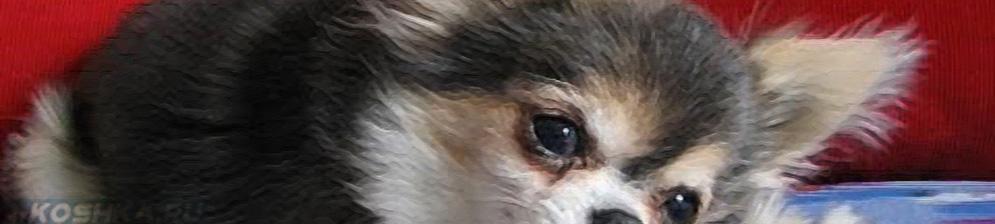 Инфаркт у собаки — симптомы и лечение