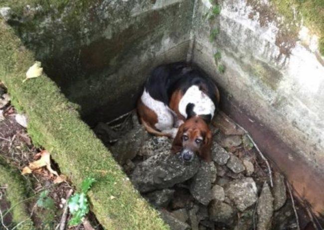 Собака неудачно упавшая в яму