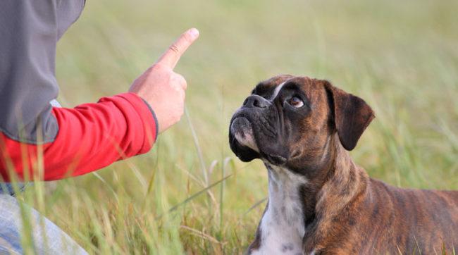 Хозяйка грозит пальцем своей собаке