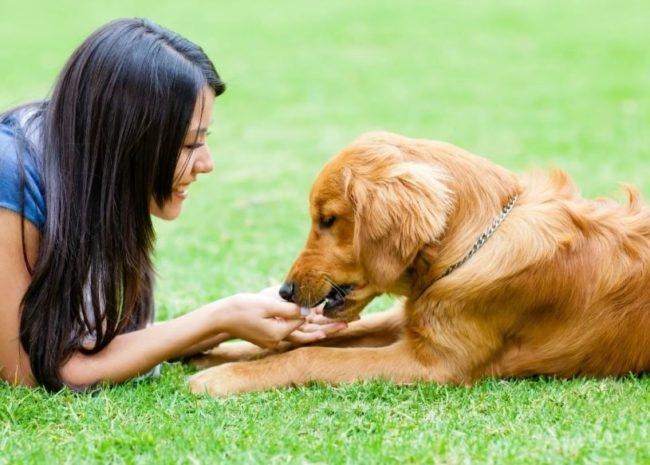 С любимой собакой на зеленой травке