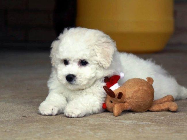 Грустная небольшая собачка скучает в одиночестве без хозяина