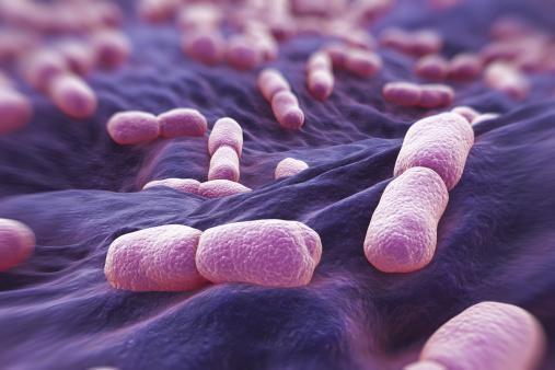 Внешний вид палочкообразных бактерий Listeria под микроскопом