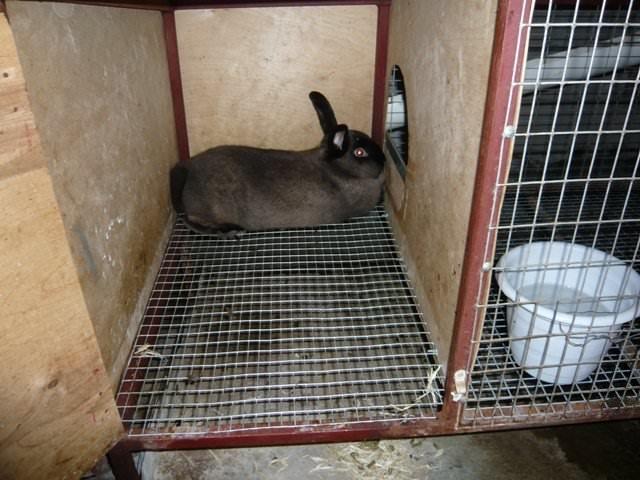 Кролик в клетке после проведения очистки и дезинфекции