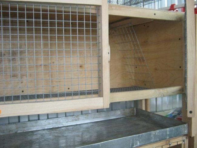 Чистая клетка с лотком для разведения кроликов в домашних условиях
