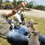 Как вылечить у кролика дисбактериоз thumbnail