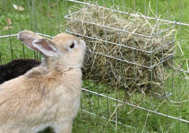 Кормушка с сухим сеном в проволочной клетке серого кролика