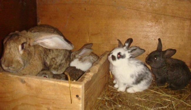 Молодые крольчата в клетке с подстилкой из старой соломы