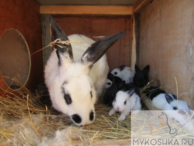 Крольчиха и её кролики в клетке с соломой